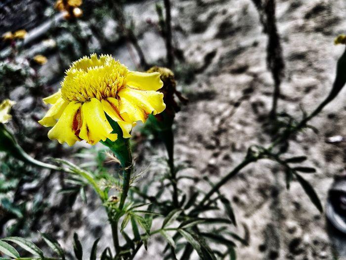 little flower🌼🌼🌼 #flower  #flower_portrait #Nature