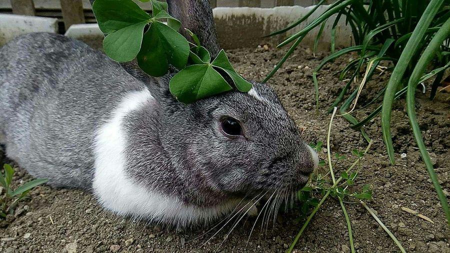 Summer Run Camera First Eyeem Photo Professionalphotography Professional Photographer Proffesional Profesyonelfotograf Animals Rabbits 🐇 Rabbit Rabbits Tavşan