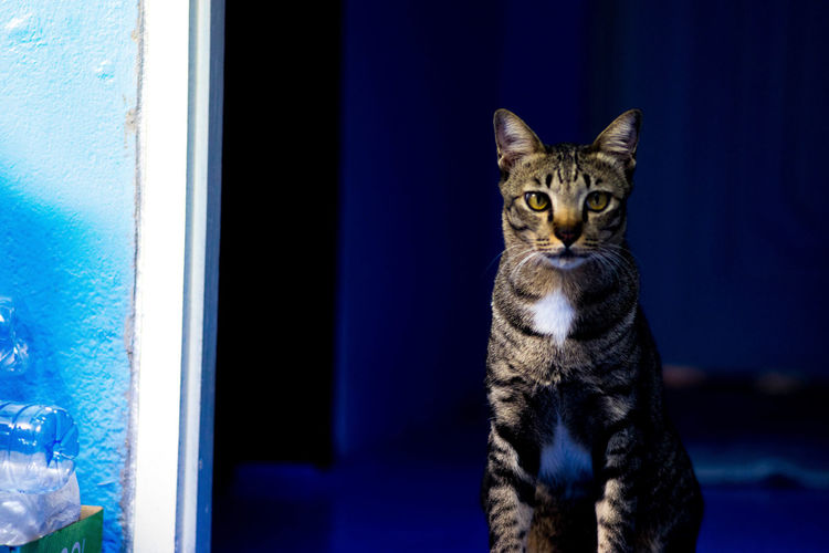 Portrait of tabby cat in dark