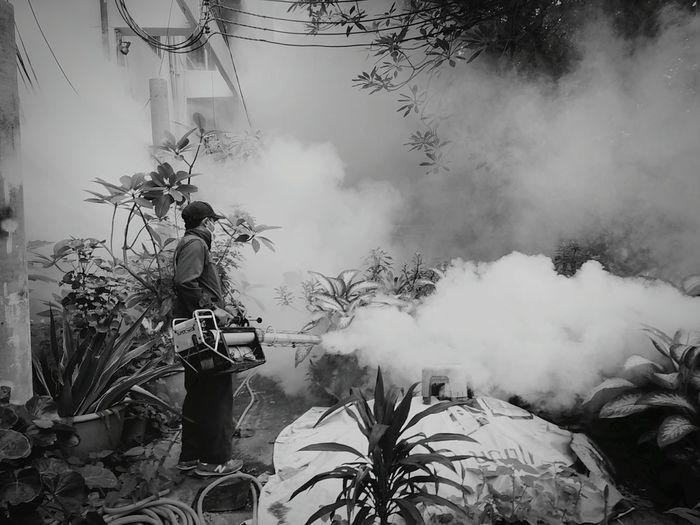 Worker fogging mosquito spray on plants