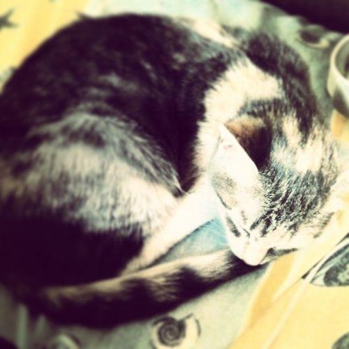 Weetkitty Littleballoffur Pretty Jolie petit chaton : ^ω^ ~~~^_^~~~