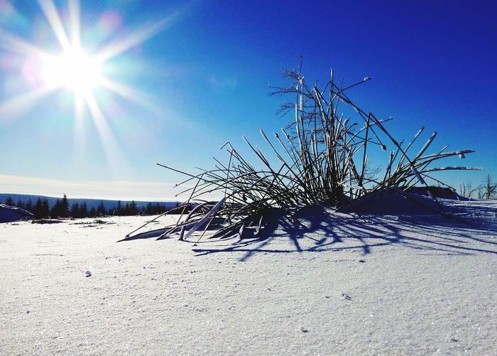 Schnee Sonne