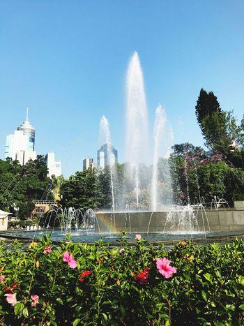 Morningrun Postcard Picture Little Rainbow Botanical Gardens