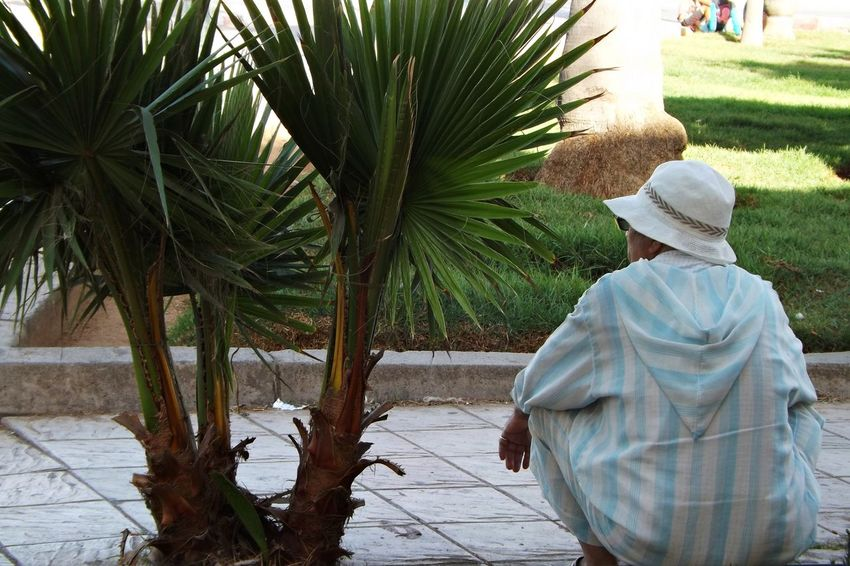 Assis Chapeau Djellaba Beauty In Nature Day Growth Leisure Activity Lifestyles Men Nature Ombre One Person Outdoors Palm Tree People Real People Rear View Senior Adult Tree Walking Women