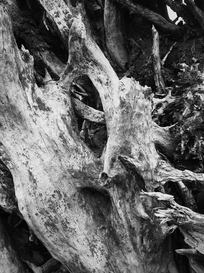 Black & White Black And White Nature Close-up Textured  Tree Trunk Outdoors Knotted Wood Weathered Dead Tree Abstractions Layers And Textures Shapes In Nature  Natural Condition Driftwood Oddities Shapes And Forms Abstract Nature Beauty In Nature Natural Collages Abstract Wood - Material