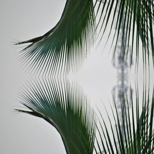Branch Nature Tree No People Water Palm Tree Leaf Close-up Outdoors Sky Frond Day Palm-tree Experimental Photography
