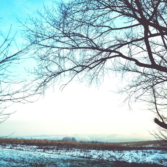 Chilly morning. Wakefield Cold Winter ❄⛄ Landscape #Nature #photography Winter Trees
