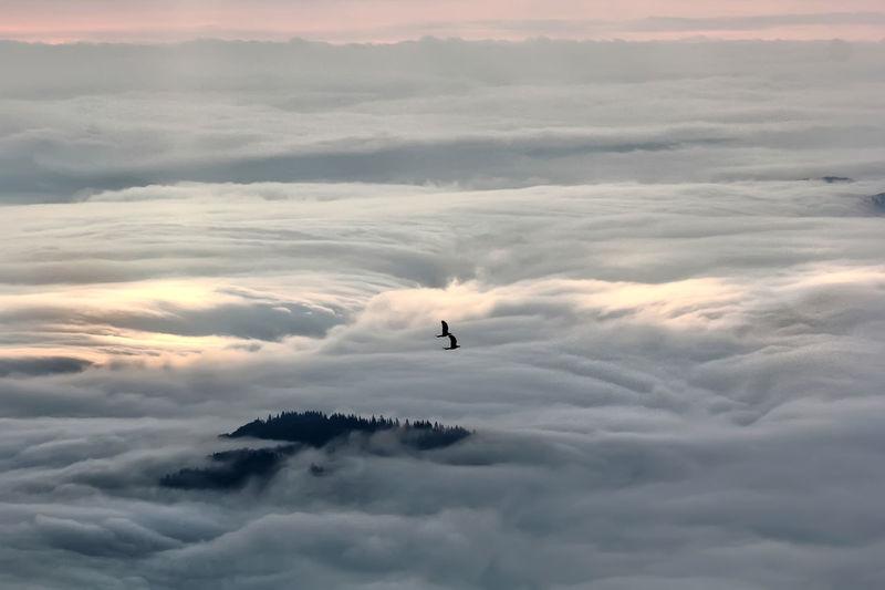 Light Beauty In Nature Bird Birds Silhouette Cloud - Sky Flying Fog Foggy Morning Horizon Mid-air Mist Misty Morning Mountain Nature Silhouette Sky Sunrise White
