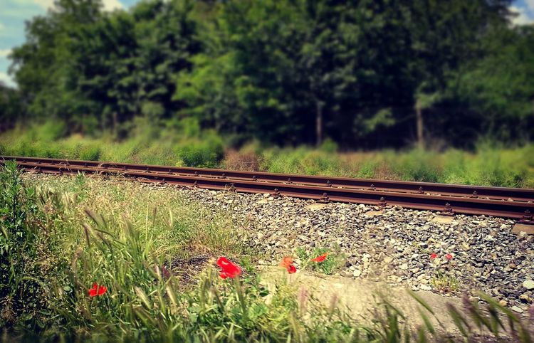 Train Rail Out Of The City Enjoying Life Flowers