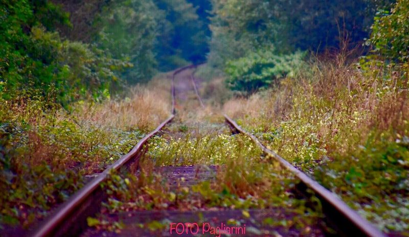 Fall Arrives Wirh Great Strides Railroad Station Germany Beauty In Nature Old Road Eyemphotography Nature Photography Natural Beauty Eye4photography  EyeEm Best Shots In This Beautiful Place Fine Art Photography Eye4photography  EyeEm Nature Lover EyeEm Gallery Transportation