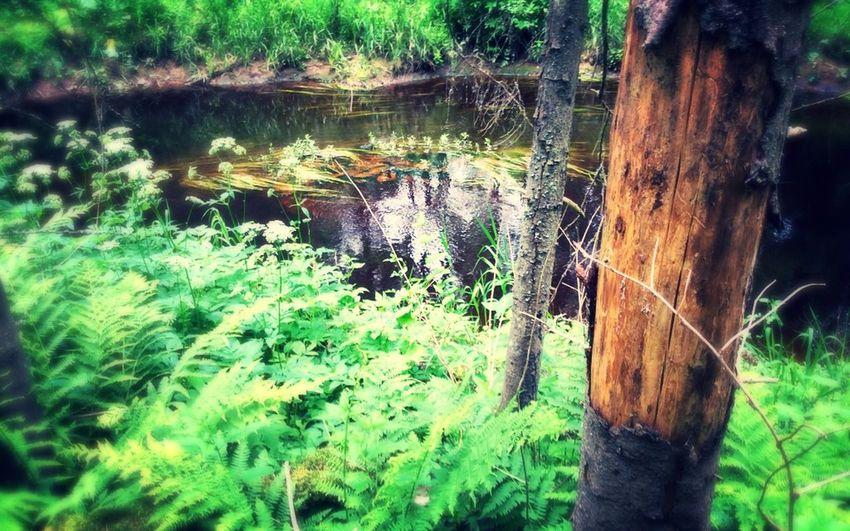 Tree outskirts Walking