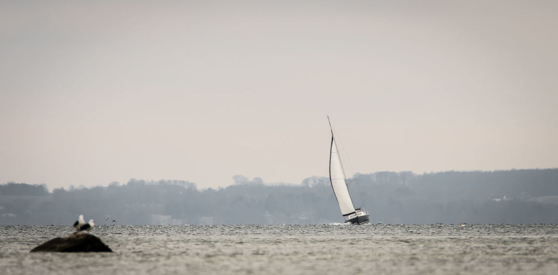 Animal Animal Themes Animal Wildlife Animals In The Wild Beauty In Nature Copy Space Day Mode Of Transportation Nature Nautical Vessel No People Outdoors Sailboat Sailing Sea Sky Transportation Water Waterfront