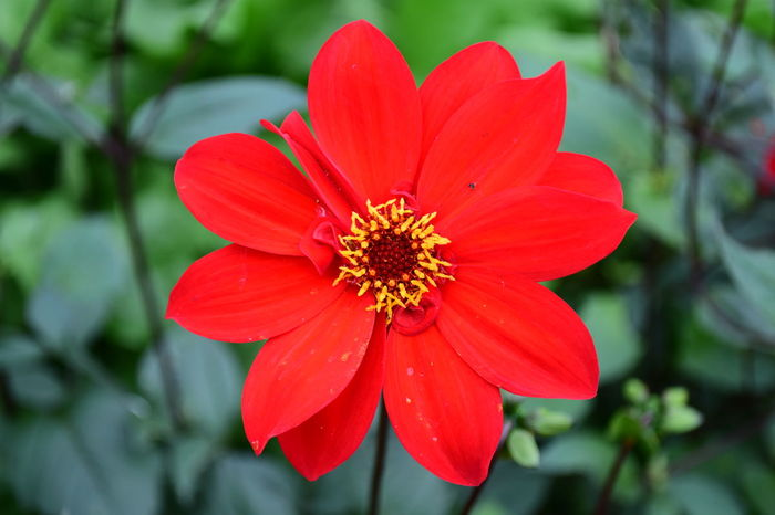 Flower Petal Flower Head Nature Red Beauty In Nature Fragility Plant Outdoors Close-up Day Freshness Growth No People Pink Color Springtime Zinnia