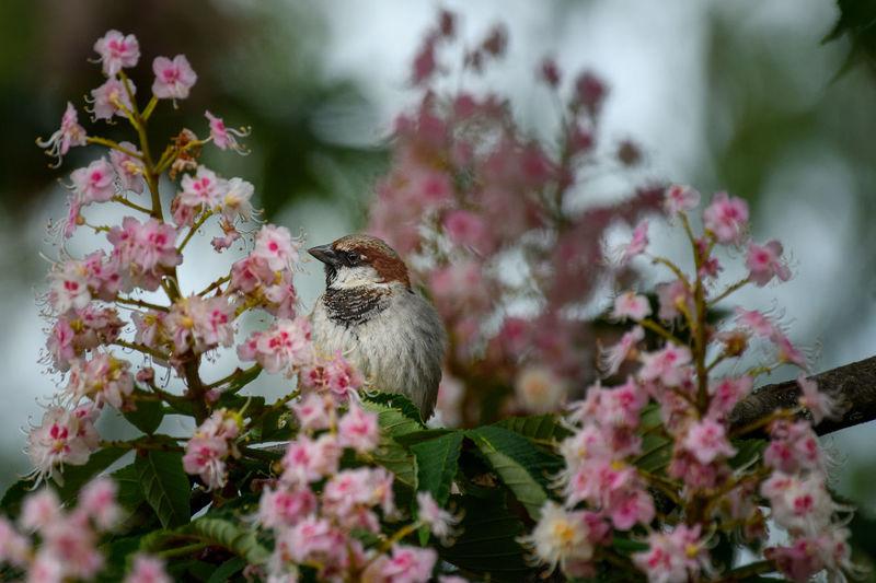 Bird perching on a flowering tree.
