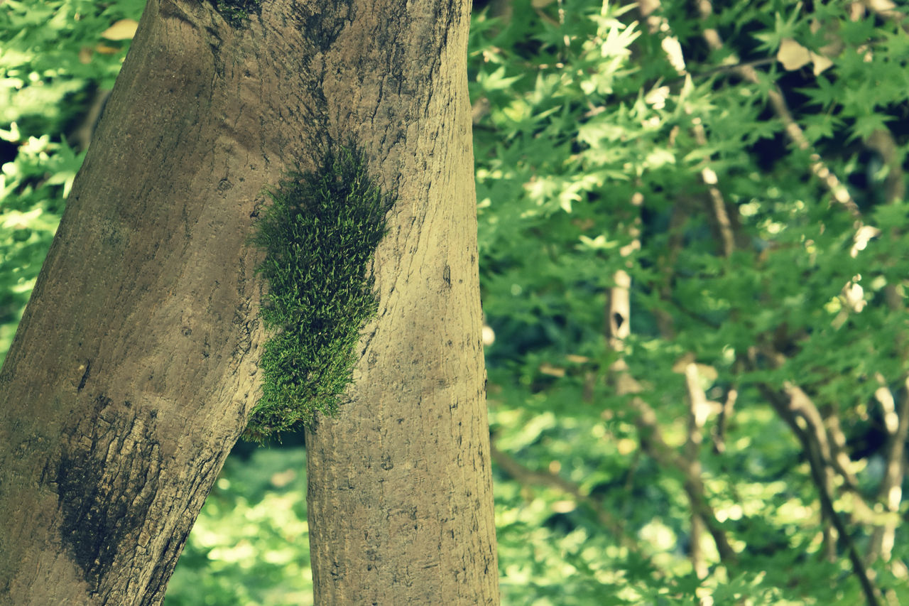 CLOSE-UP OF TREE TRUNKS