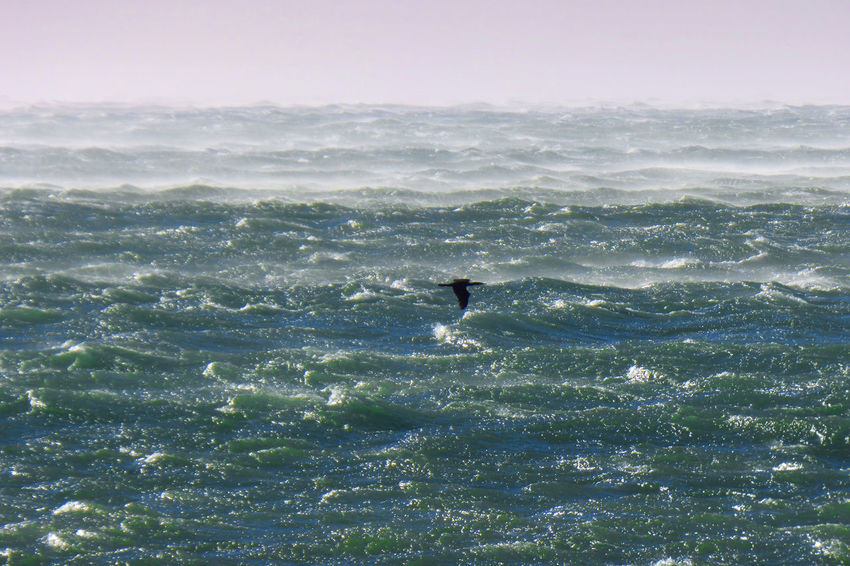 Beauty In Nature Cormorant Flying Day Motion Nature Outdoors Scenics Sea Sea Smoky By The Wind Sky Swimming Water Waterfront Wave