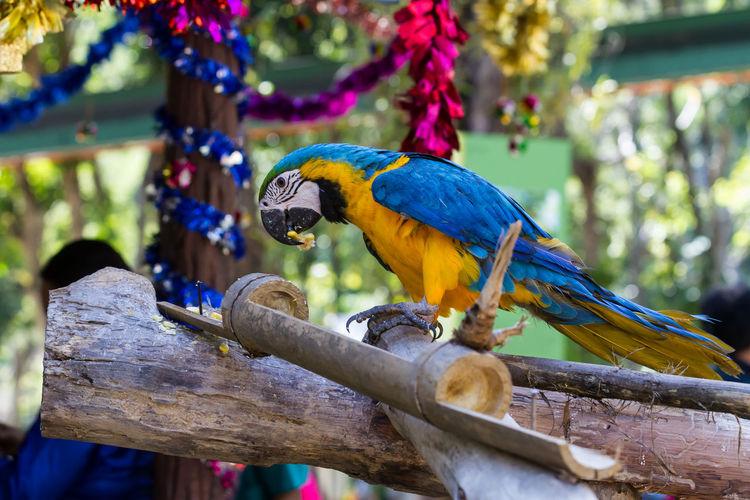 Animal Photography Animals Birds Chiang Mai Night Safari