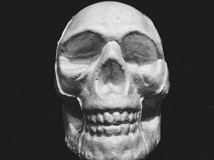 Human Skull Human Skeleton Human Body Part Bone  Spooky Human Bone Indoors  Close-up Portrait People Fear Black Background Skull Horror Skeleton Halloween Human Face Body Part Studio Shot Ominous