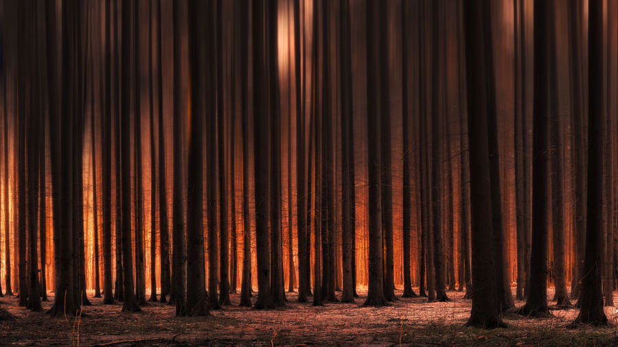 View Of Tree Trunks In Forest Fire