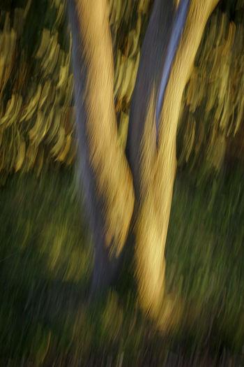 Defocused image of trees on field