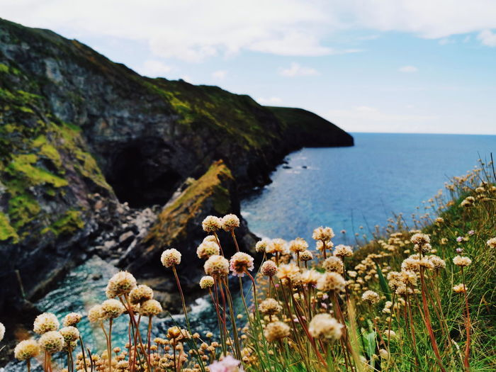 St Agnes, Cornwall. Coastal walks. Flower Sea Beach Cliff Prickly Pear Cactus Water Rock - Object Cactus Uncultivated Sky Seascape Coastline Flower Head Rock Formation Coastal Feature Coast