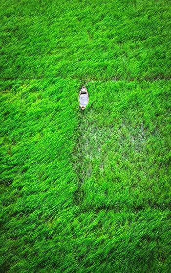 People walking on grassy field