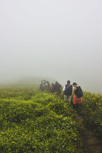 Hiking Fog