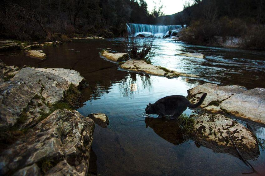 Pour la fille de Martine , Hervé ... Water Reflections Cat River EyeEm Best Shots