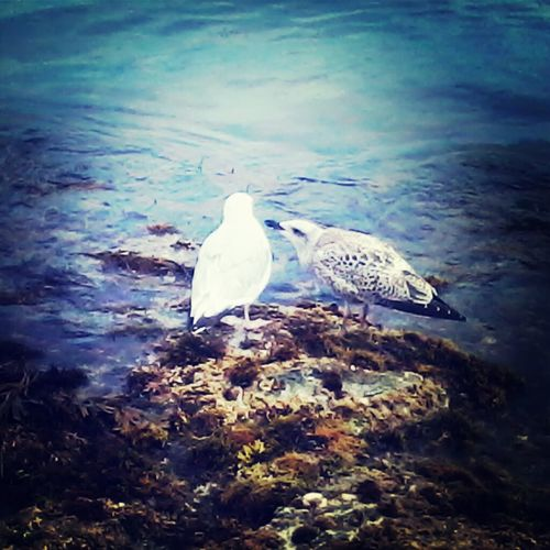Love Oiseaux