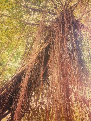 Root Roots Roots Of Tree Root Of A Tree Root Of The Tree Root Of Tree Color Of Nature Color Of Tree Colorful Tree Tree View Tree Photography Tree_collection  Nature Tree