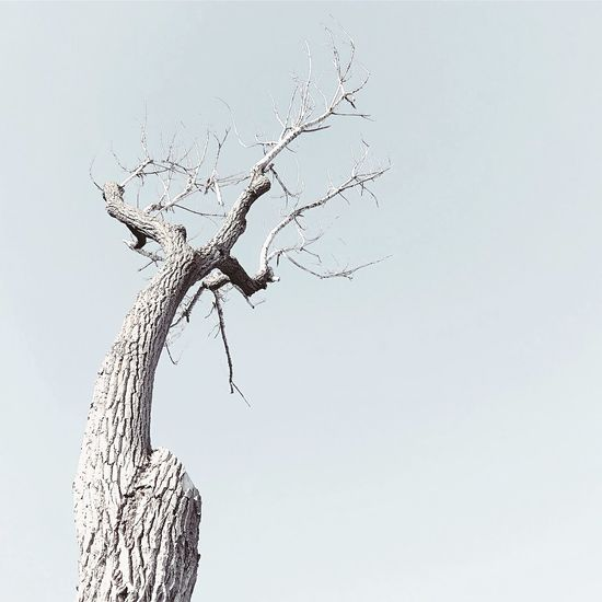 Low Angle View Day Dead Plant Outdoors Bare Tree No People Nature Branch Clear Sky Dead Tree Tree Sky