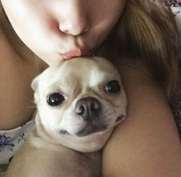 Love Chihuahua Chihuahualovers Dogs