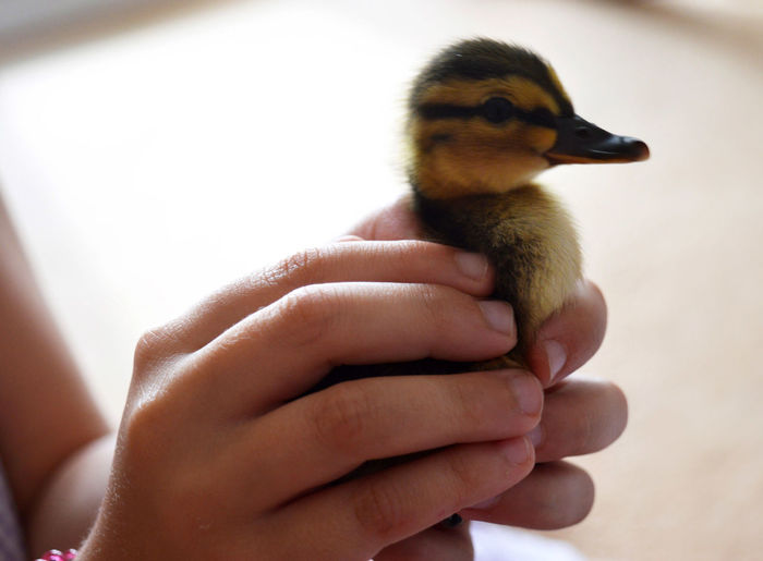 Close-up of baby hand holding a bird