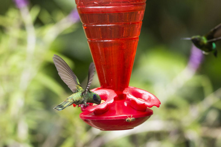 Close-up of red beetle on a bird feeder