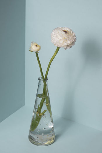 Close-up of white flower in glass vase