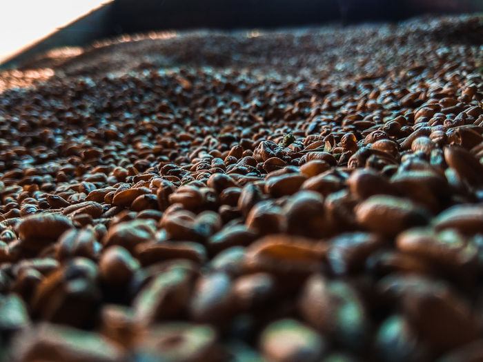 Selective Focus Abundance Close-up No People Large Group Of Objects Brown Still Life Food Indoors  Food And Drink Textured  Day Surface Level Full Frame Freshness Roasted Coffee Bean Backgrounds Metal Caffeine Pebble Harvest Harvest Time Harvest Season Abstract Art Farm Life Whey The Minimalist - 2019 EyeEm Awards