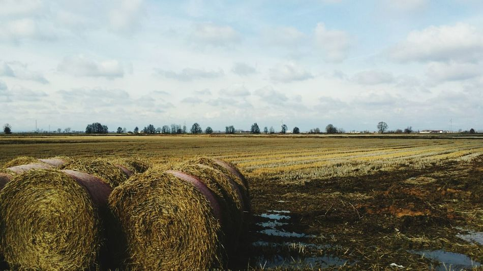 Showcase March Hay Hay Bales Rural Fields Fieldscape Agriculture Agricultural Land Countryside Country Life