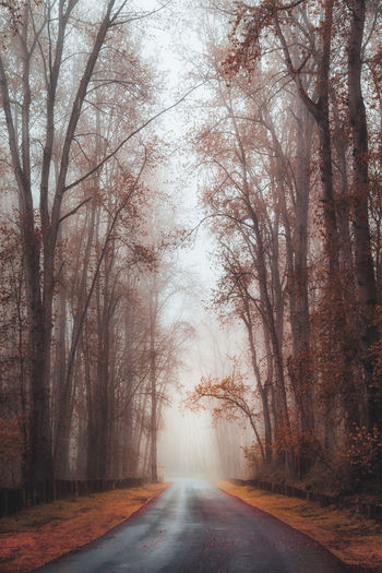 Morning mist somewhere near Portland, Oregon, USA. Autumn Oregon Portland Bare Tree Beauty In Nature Diminishing Perspective Direction Fog Forest Landscape Mist Nature No People Outdoors Plant Road Scenics - Nature The Way Forward Tranquil Scene Tranquility Tree WoodLand