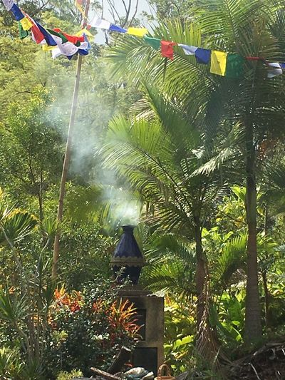 New Year's Day celebration at Wood Valley Temple on the Big Island Big Island Burning Incense Buddhist Temple Growth Plant Tree Day Nature Outdoors Hanging Beauty In Nature