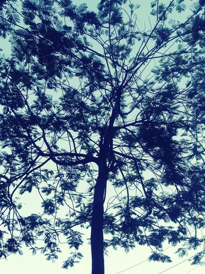 Nature Nature Photography Naturelovers Dawn Pleasant Art Pattern Shadow No People Close-up Green Patterns In Nature Branches And Sky Branches Eyeemselects Noflowers Leaves🌿 Leaf Vein White Tree Branch Forest Backgrounds Silhouette Tree Trunk Sky Directly Below Spiral Staircase Tree Canopy  Upward View Bark Dense Growing Plant Life Leaves Calm Treetop