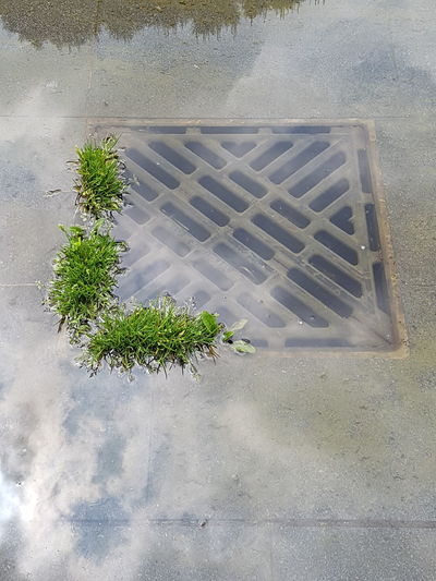 High Angle View Day No People Outdoors Close-up Nature Grid Pavement Metal Iron Manhole  Community Italy Water Beauty In Nature Grass Nature Colors Cloud Grass And Water Pavements After Rain Reflection The Power Of Nature