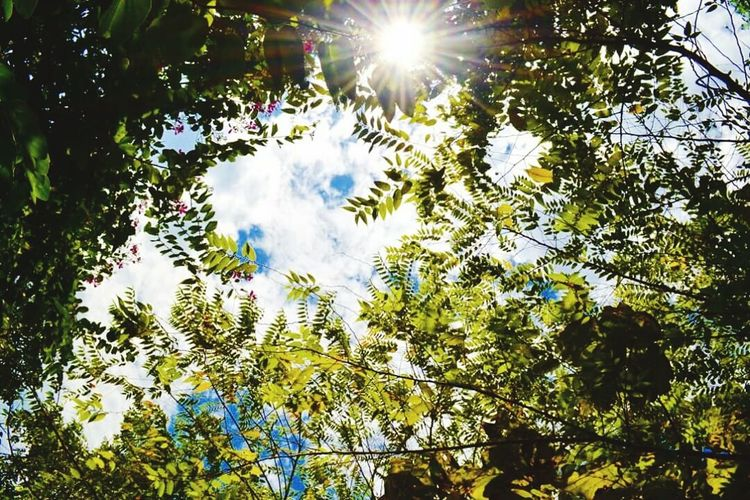 Tree Low Angle View Sunlight Branch Growth Sun Sunbeam Beauty In Nature Lens Flare Scenics Sky Green Color Day Nature Outdoors Back Lit Tranquility Tranquil Scene Bright Cloud - Sky