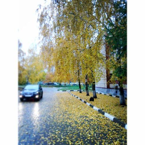 прекрасная осень! Photo фото Школа шк машина вечером октябрь осень золотая рассвет желтая эннн 2013 16.10.13