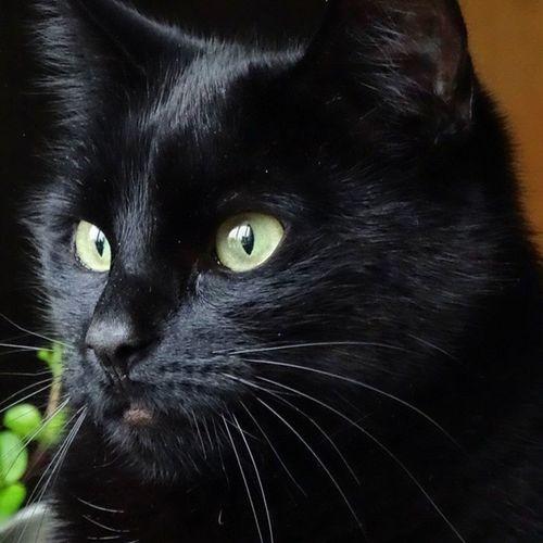 Myla Cat Kat Poes nofilter sony hx400v