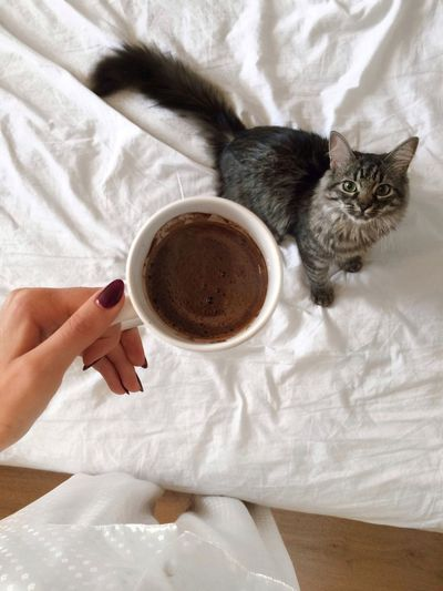 Cat Looking At Coffee Cup Being Held By Woman