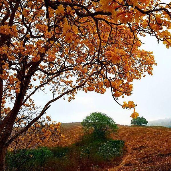 Amo meu sertão!!!!!! Local:Simão Dias-Sergipe Galaxy s6 Modo automático ----------------------------- Ig_sergipe Brazil_repost Olharesemimagens Imagensemomentos Great_captures_brasil Great_captures_nature Braziliangallery Wow_brazil Wu_brazil Nordestemeulindo Brcountryside Galaxys6 UMarDeTalentos Garden_Explorers Paixoesporflores Brnaturallandscapes Grandesmaravilhas Brhdr Insta_pordosol Apreciadores_natureza Brasilbr55 Brskies Ceuazulbr Oceano_brasil Divinafotografia brazilgram_ olhar_brasil soulnature_ noroestebrasil brasil_greatshots