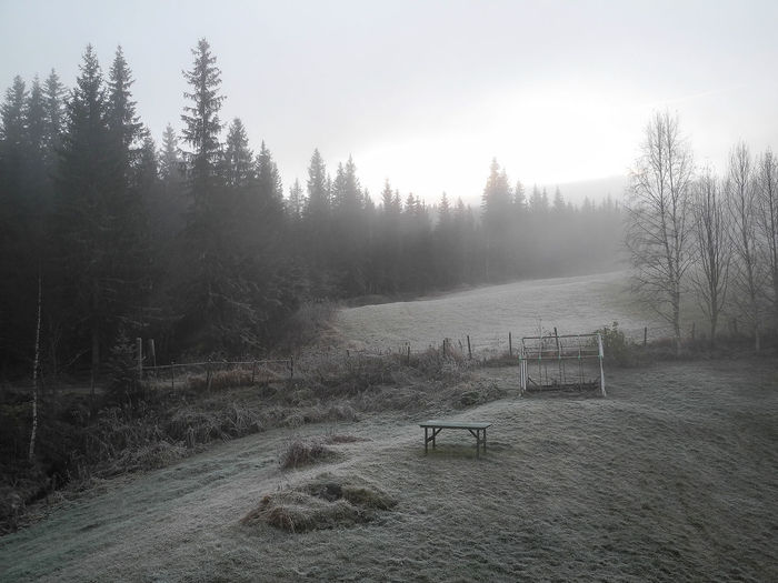 A cold, silent morning with frost and fog over a garden in the countryside Landscape Rime Winter Frost Frosted Frozen Hoarfrost Misty Morning Stillness Trees Weather Chill Cold Coldness Copy-space Countryside Fog Foggy Freeze Garden Hoar Mist Seasonal Silence