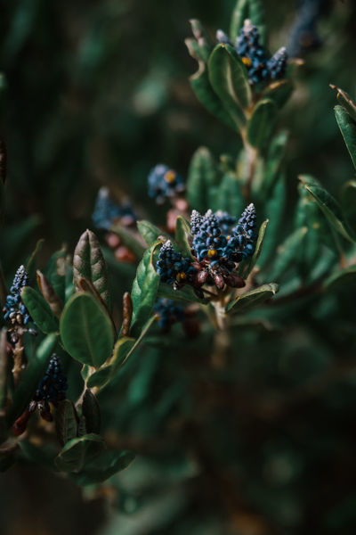 Details. Nature Outdoors Travel Destinations Explore Discover  Adventure Tungurahua Hiking South America Latin America Remote Non-urban Scene Leaf Plant Part Growth Freshness Selective Focus Green Color No People Close-up Beauty In Nature Moody Dark Blossom Plant
