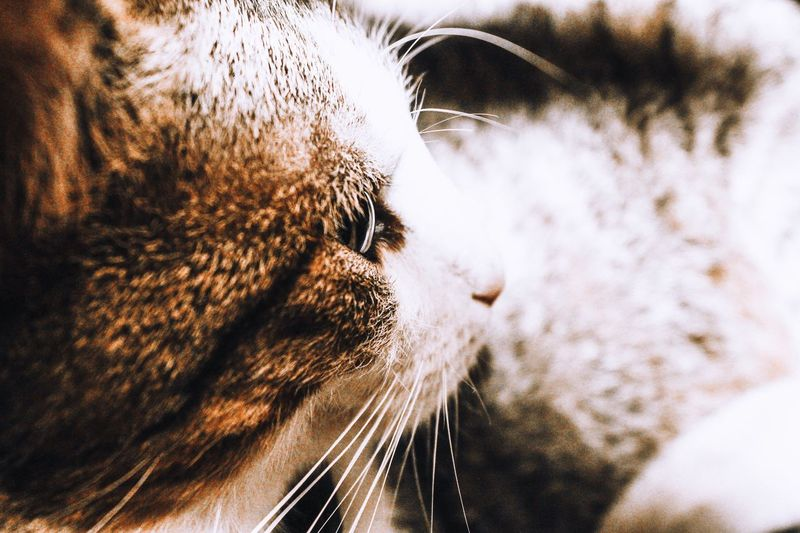 Cat♡ Portrait Cat Lovers Cats Of EyeEm Close-up No People Nature Day Outdoors Full Frame Mammal Animal Domestic Animals Cat Feline