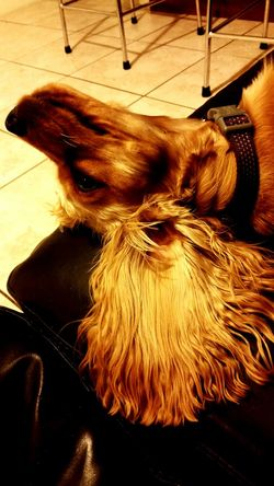 Hanging Out Relaxing Enjoying Life Animal Love Dog❤ Dogslife Dogs Of EyeEm Dogoftheday Dogmodel